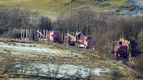 Becks wood timber wagons
