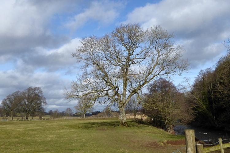 Rose Castle tree