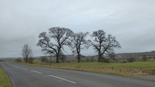 three trees Canonbie