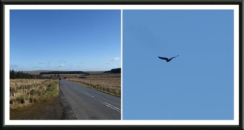callister and buzzard