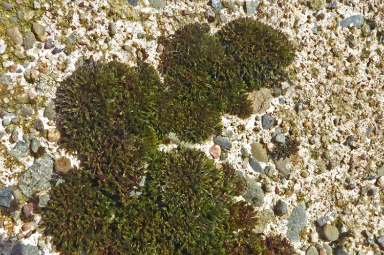 moss on timpen trig point