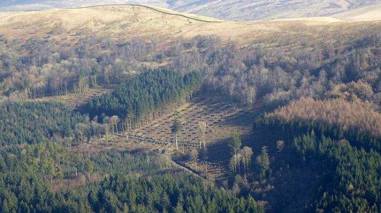 tree felling Longfauld