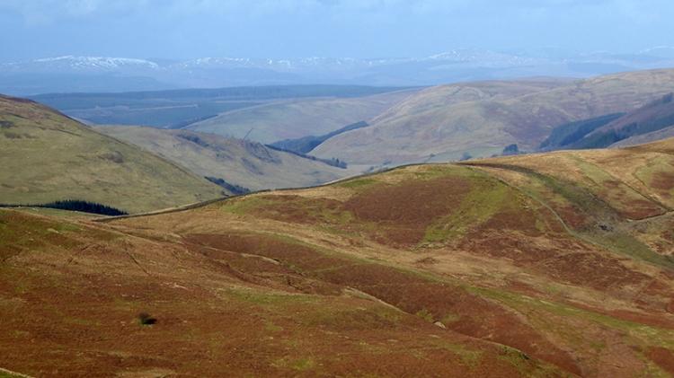 Ettrick Hills in background