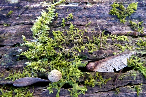 moss and seeds
