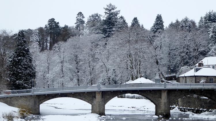 Langholm bridge and trees