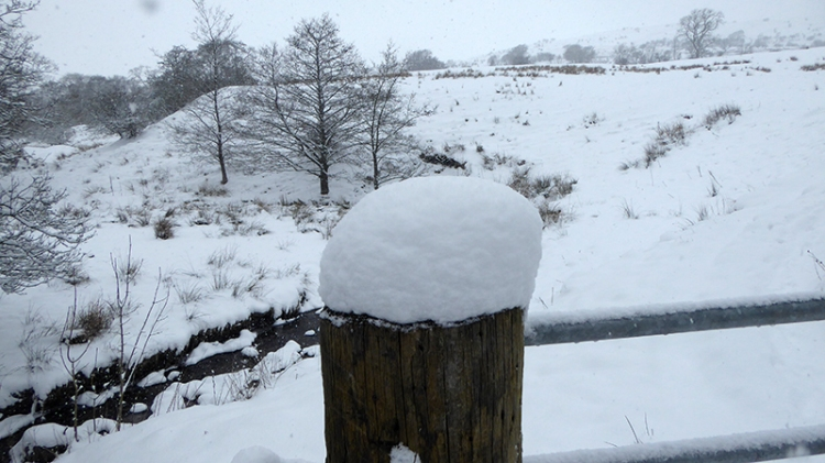snow on fence post