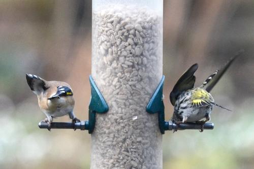 birds' bums