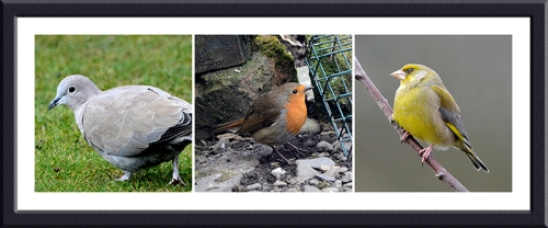 dove, robin and greenfinch