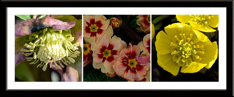 flowers march