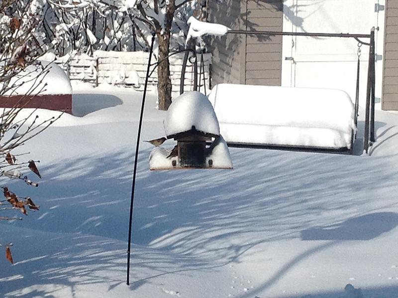 snow in manitoba