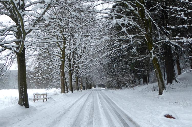 Lodge walks in snow