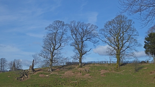 Trees at Waterbeck