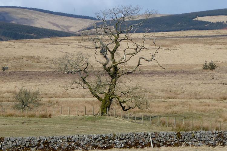 tree at Bigholms