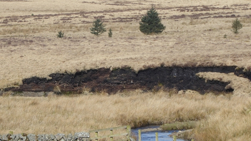 peat at Bigholms