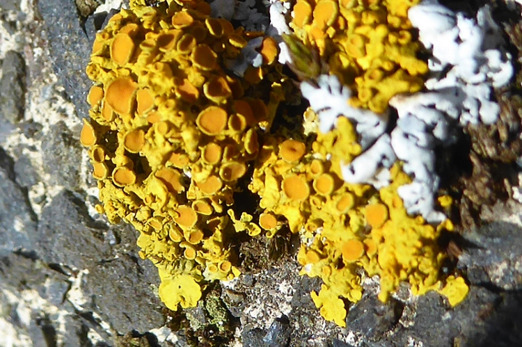 lichen at Bigholms