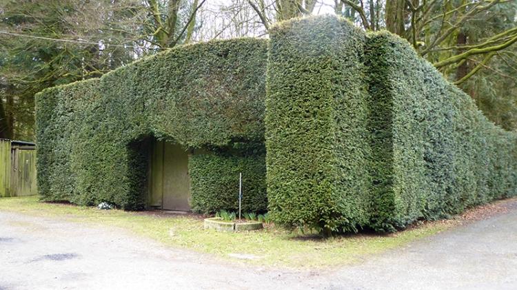 Robbie's hedge