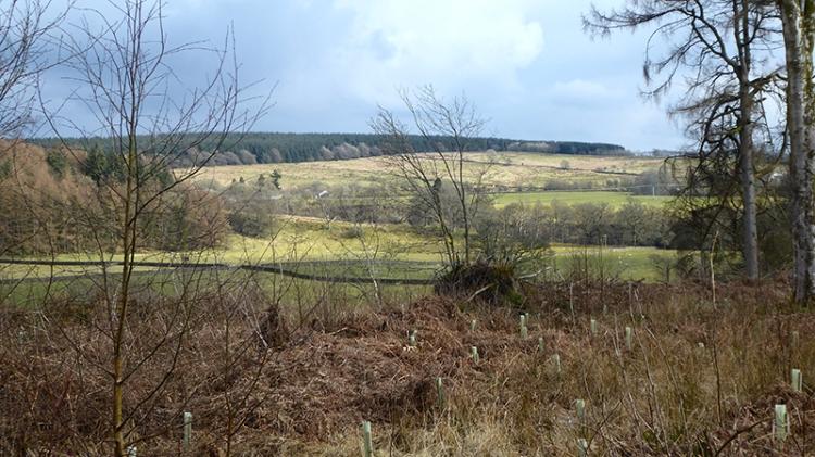 view of Eskdale