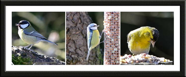 great tit, blue tit and siskin