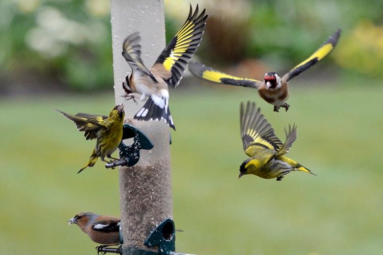 very busy feeder
