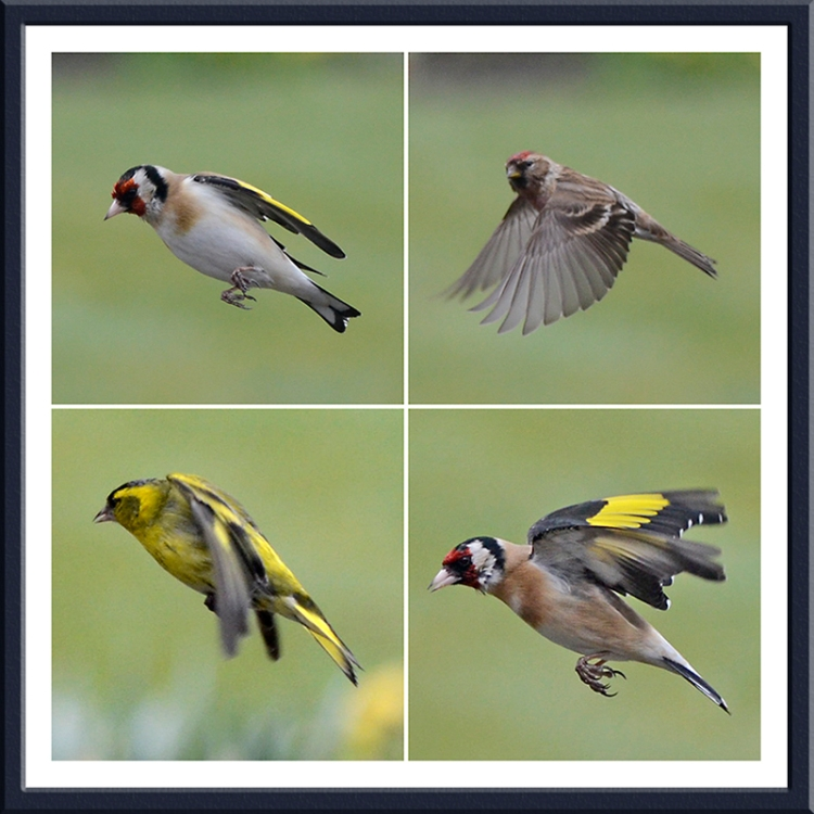 flying quartet