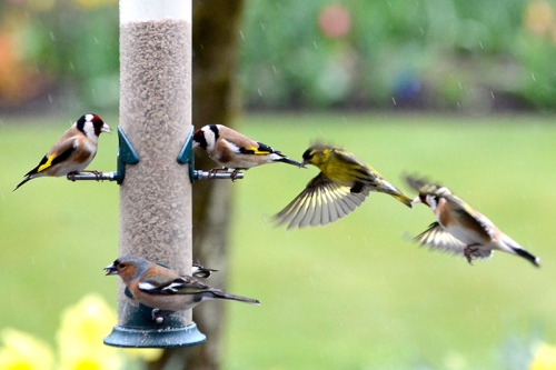 queue at the feeder
