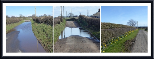 puddles and daffs