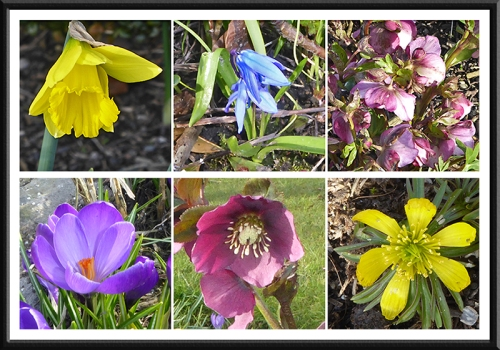 garden flowers early april