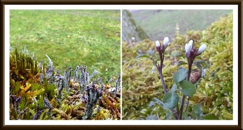 lichen and wild flower