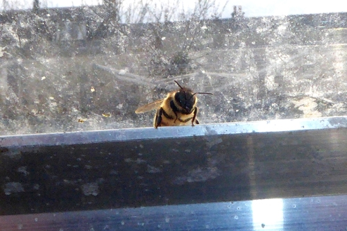 bee in greenhouse