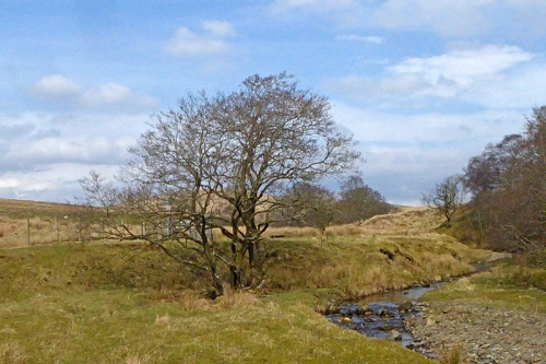 tree and glencorf burn