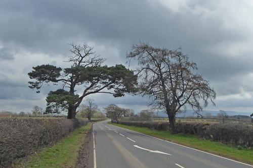 Brampton road