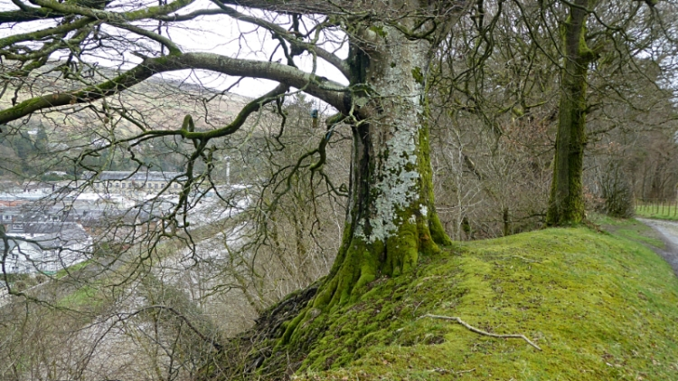 tree on bank at Stubholm