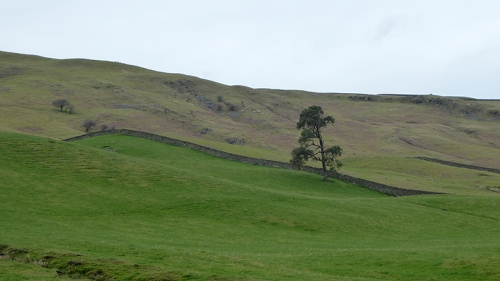 Ewes valley april