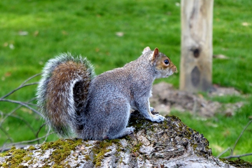 botanic gardens squirrel