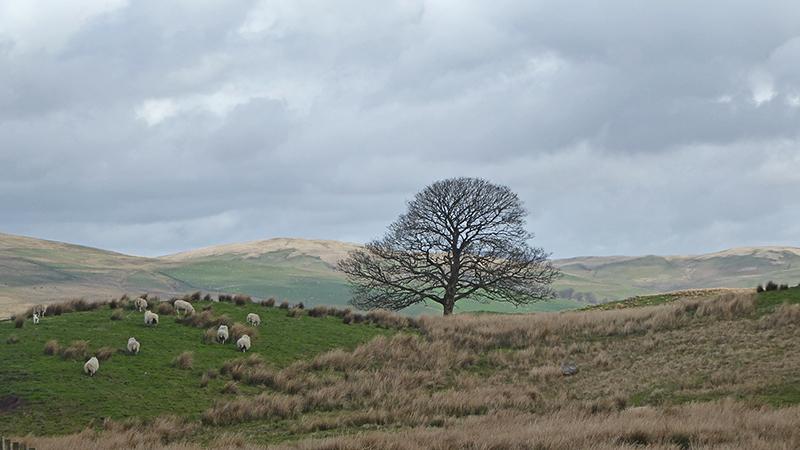 Bloch tree