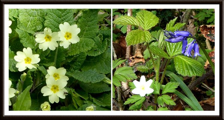 Lodge walks wild flowers