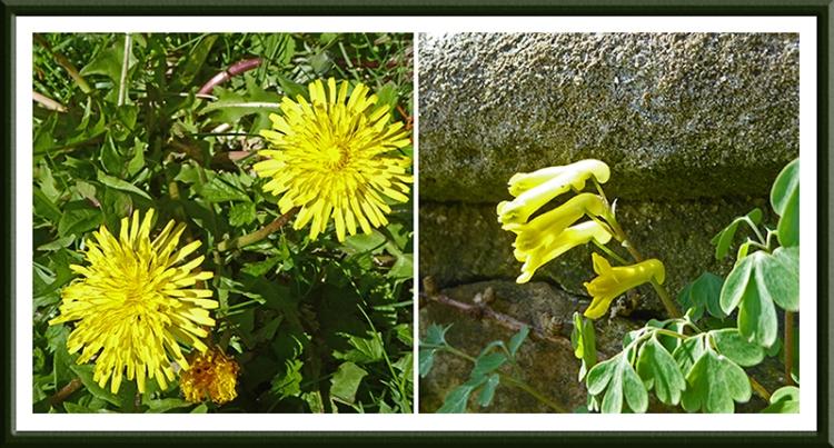 wild flowers Scholars Field