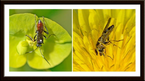 insects on flowers