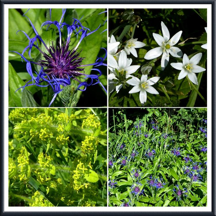 Gair road wildflowers