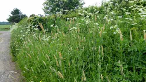 grass at brow well