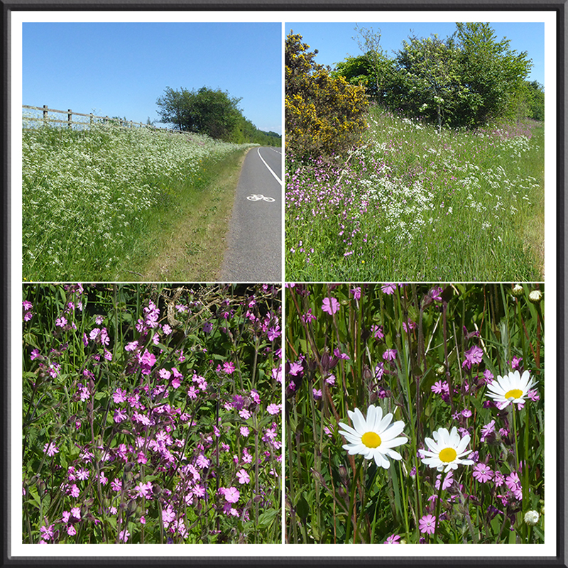 Old A74 wildflowers