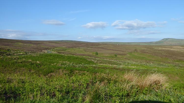 On Langholm Moor