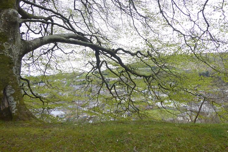 leaves on Stubholm