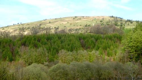Meikleholm hill in spring
