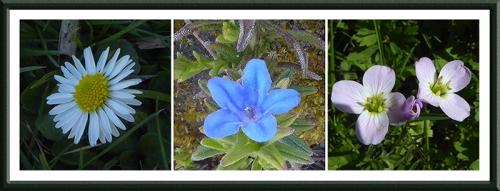 small garden flowers