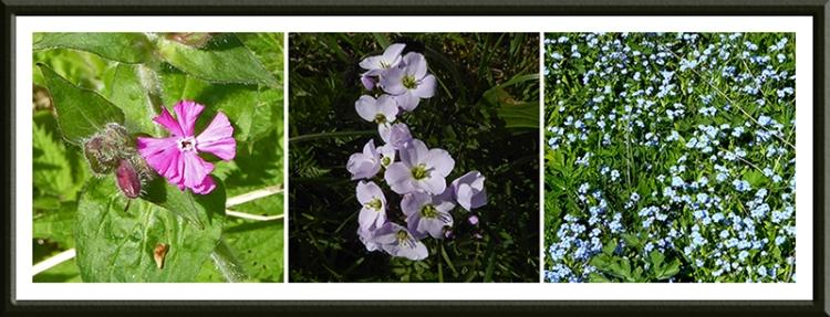 wild flowers canonbie