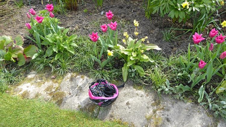tulips and helmet