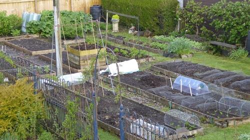 veg garden may