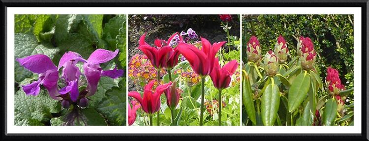 lamium, tulip and rhododendron