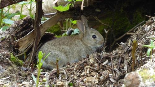 park rabbit